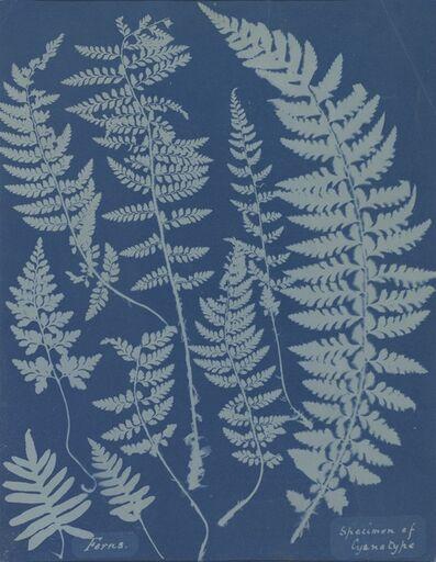Anna Atkins, 'Ferns. Specimen of Cyanotype', 1840s