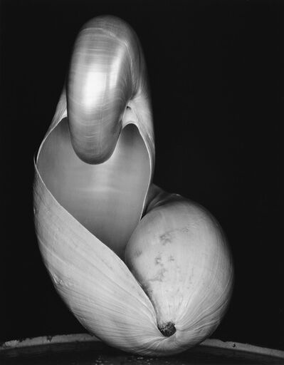 Edward Weston, 'Two Shells.', 1970s