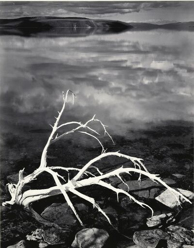 Ansel Adams, 'White Branches, Mono Lake', 1950