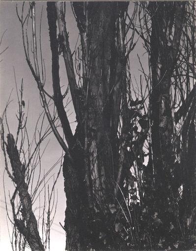 Alfred Stieglitz, 'Poplar, Lake George, 1936', 1936