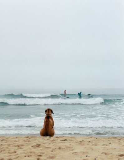 Michael Dweck, 'Surf Dog, Montauk', 2002