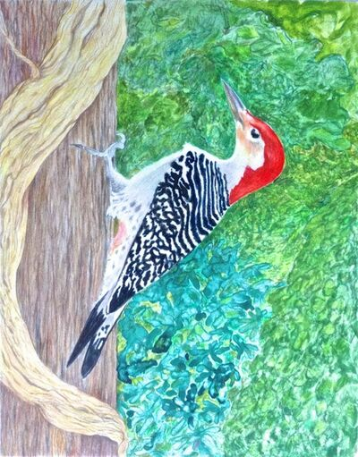 Eleanor Hubbard, 'Wet Woodpecker', 2015