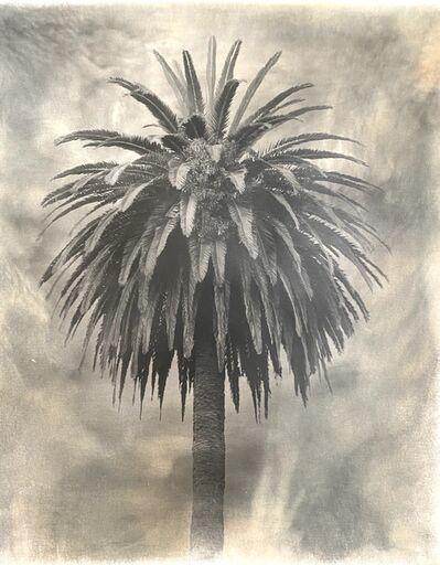 Robert Stivers, 'Palm 1', 2019