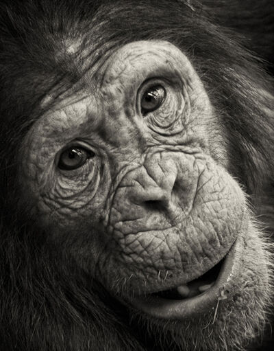 Paul Coghlin, 'Cousin's Eyes ~ Portrait of an Ape', ca. 2012