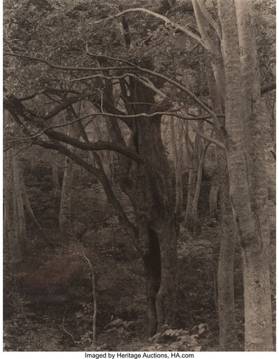 Takeshi Shikama, 'Chyokai #51 from the series Silent Respiration of Forests', 2006