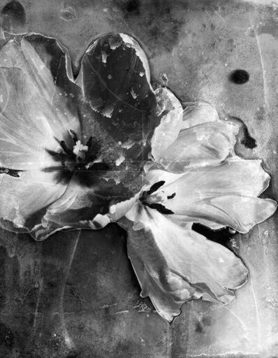 Osheen Harruthoonyan, 'Tulip II', 2010
