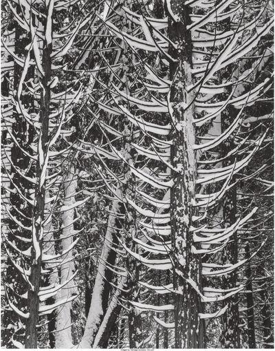 Ansel Adams, 'Winter, Forest Detail, Yosemite Valley', 1949