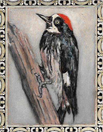 Ed Musante, 'Acorn Woodpecker/A.Fuente'