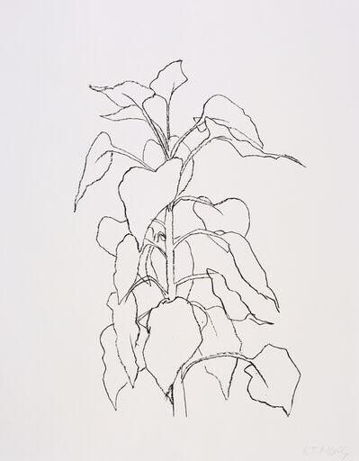 Ellsworth Kelly, 'Sunflower II', 2004