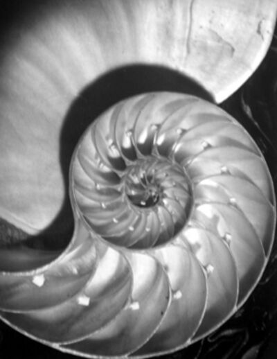Horst P. Horst, 'Nautilus Pompileus II', 1945