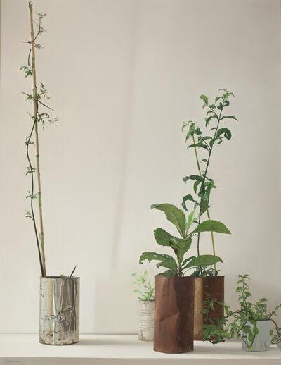 Claudio Bravo, 'Plants', 1972