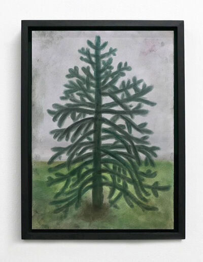 Andrew Sim, ''A small, ornamental Monkey Puzzle tree'', 2020