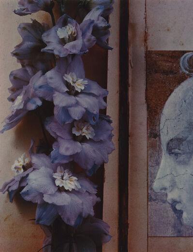 Olivia Parker, 'Hybrids', 1978
