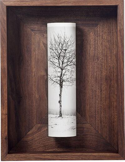Cai Dongdong, 'A Tree', 2005