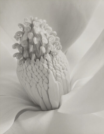 Imogen Cunningham, 'Magnolia Blossom (Tower of Jewels)', 1925