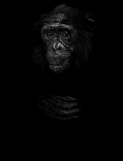 Elliot Ross, 'Animal (291), Bonobo', 2014