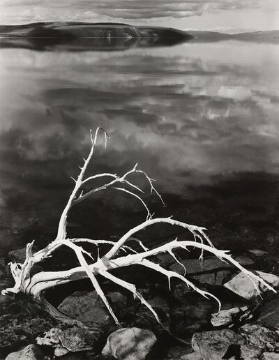 Ansel Adams, 'White Branches, Mono Lake, CA', 1950