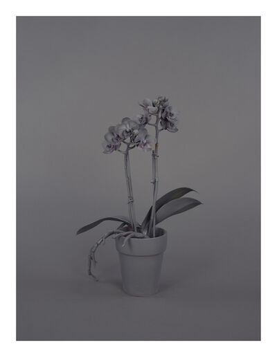 Stephanie Syjuco, 'Neutral Orchids (Phalaenopsis, small)', 2016
