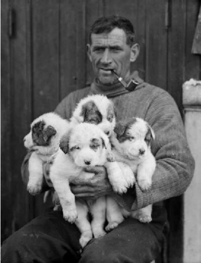 Frank Hurley, 'Tom Crean with born puppies', 1912-1914