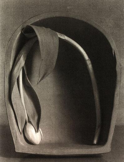 Robert Maxwell, 'Bent Tulip', 1994