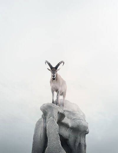 Alice Zilberberg, 'Intent Ibex', 2019