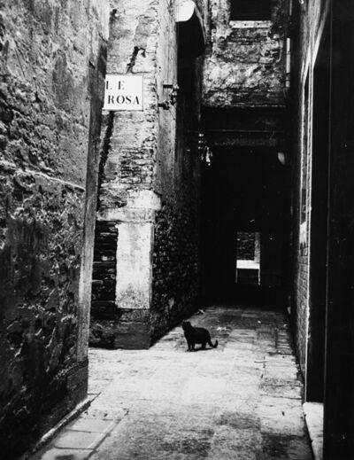 Paolo Monti, 'Gatto al Calle de la Rosa', 1951