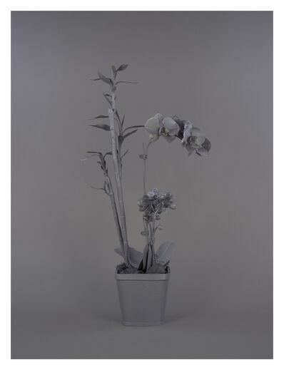 Stephanie Syjuco, 'Neutral Orchids (Phalaenopsis + Dracaena sanderana 2)', 2016