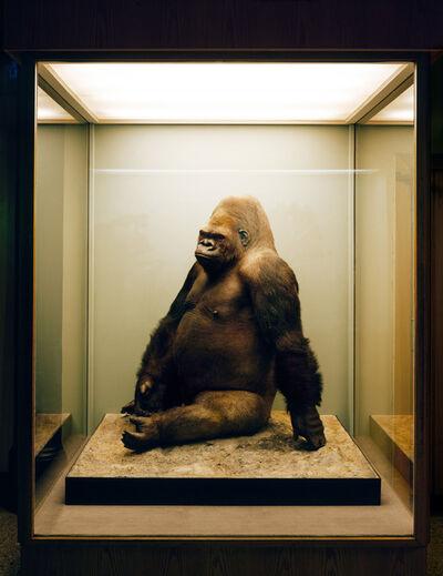 Anett Stuth, 'Object: Gorilla', 2004/21