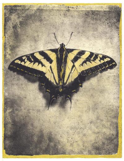 Brigitte Carnochan, 'Western Swallowtail', 2019