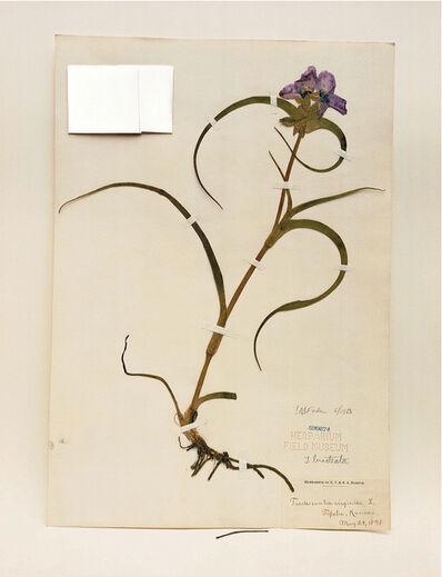 Terry Evans, 'Field Museum, Tradescantia, 1898', 2000