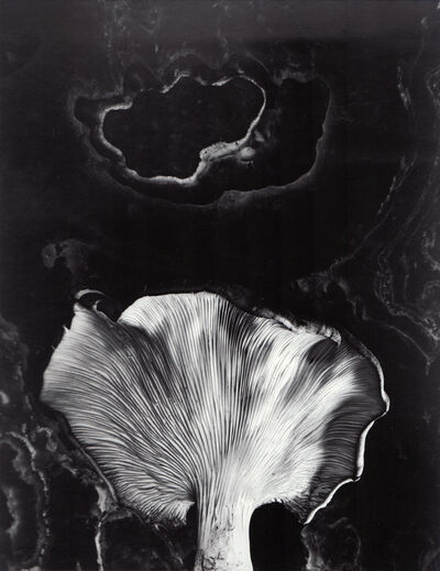 Paul Caponigro, 'Fungus, Ipswich, Mass', Neg. date: 1962 / Print date: Later