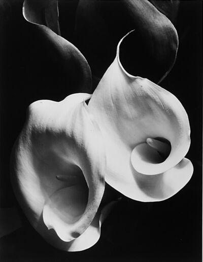 Imogen Cunningham, 'Two Callas', 1929