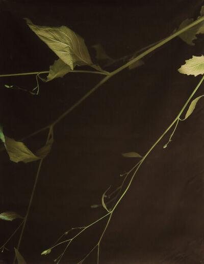 Anita Allyn, 'Flora #27', 2017