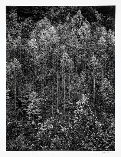 Ansel Adams, 'Dawn, Autumn, Great Smoky Mountain, National Park, Tennessee', 1948