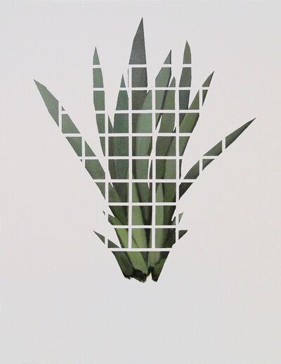 Benjámin Nagy, 'Riddle (Hidden-plant) --- Rejtvény ( Rejtett növény ) ', 2016