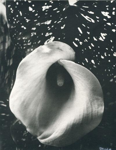 Edward Steichen, 'Untitled (Flower)', 1927