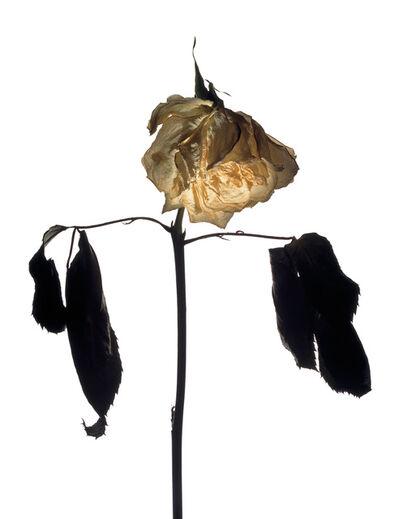 Geraldo Pace, 'Queen', 2013