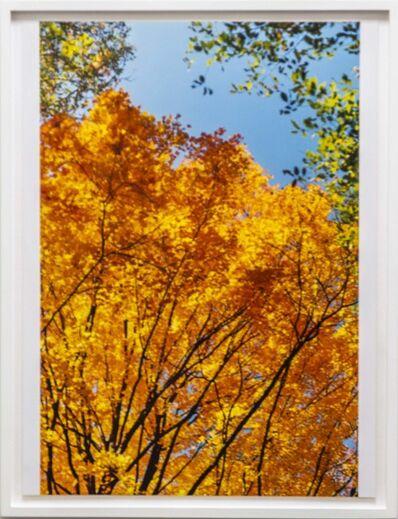 Wolfgang Tillmans, 'calendar leafs', 1994