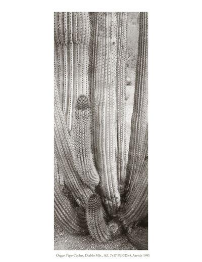 Dick Arentz, 'Organ Pipe Cactus, Diablo Mountains, Arizona', 1991