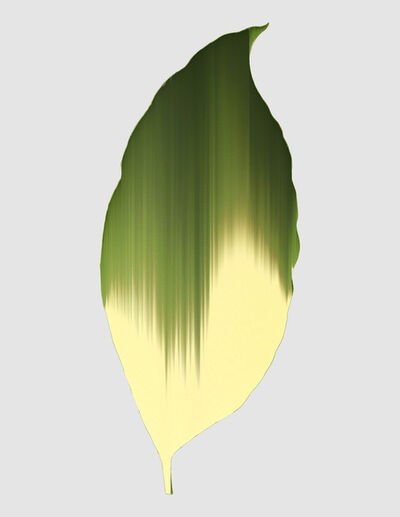 Andrea Wolf, 'Calathea Elliptica Vittata, var. 017', 2020