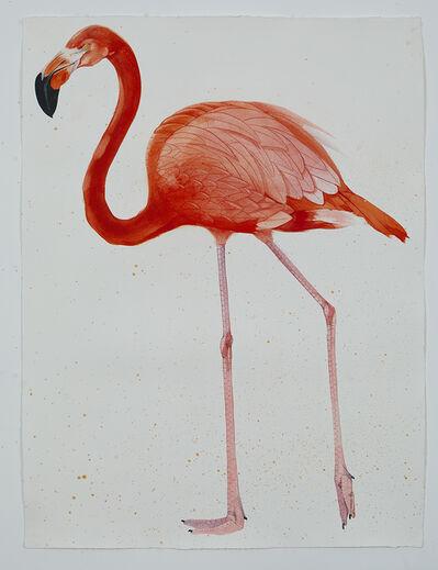 Scott Kelley, 'American Flamingo, facing left', 2017