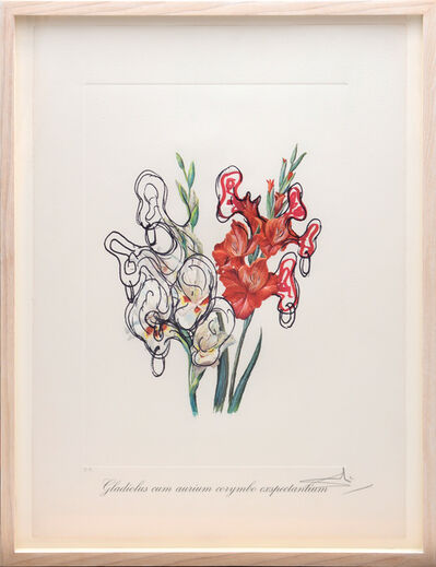 Salvador Dalí, 'Gladiolus cum aurium corymbo expectanium (Pirates Galdioli) (From the portfolio Surrealist Flowers)', 1972