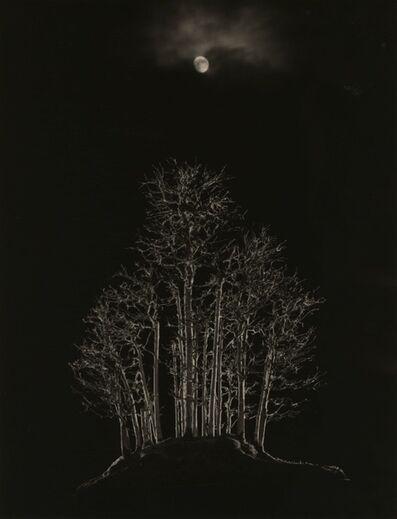 Yamamoto Masao, '#4003 from the series Bonsai', 2018