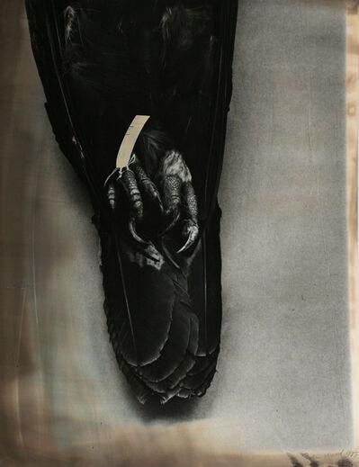 John Wood, 'Eagle Pelt', 1985