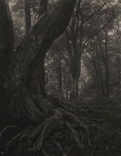Takeshi Shikama, 'Silent Respiration of Forests - Japan: Tsukiyodaira #1', 2006