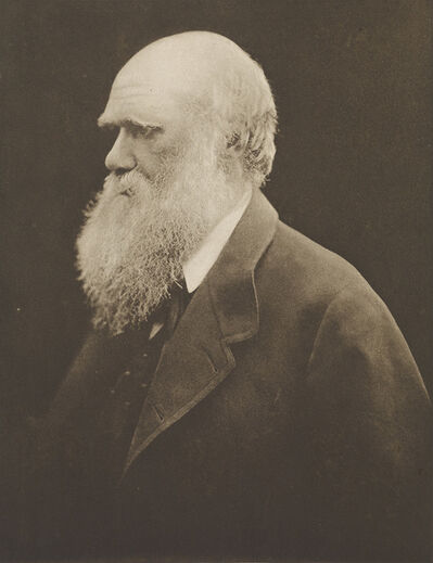 Julia Margaret Cameron, 'Charles Darwin'
