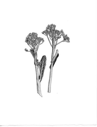Patricia Curtan, 'Broccoli di Cicio', 2012