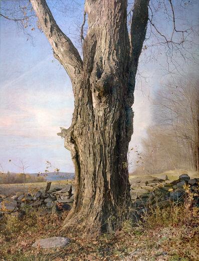 Trey Friedman, 'Trees On A Line #49, February 2011', 2011