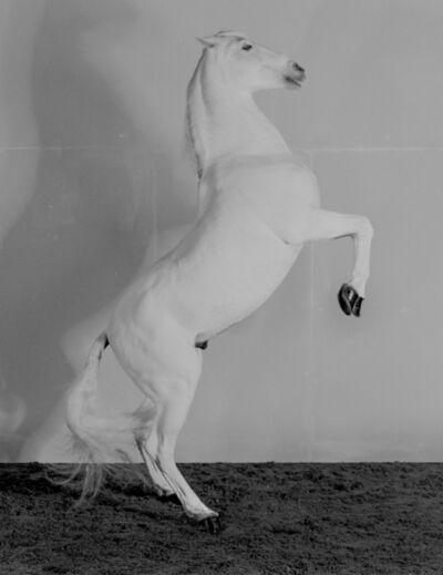 Richard Learoyd, '7 Horses (Horse 7)', 2017