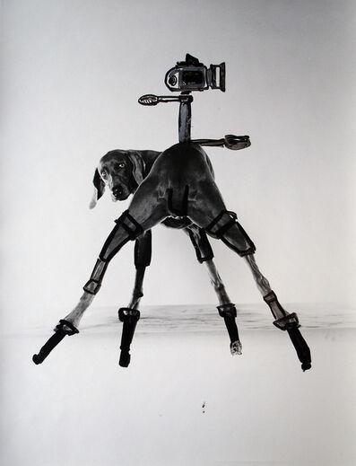 William Wegman, 'Quadrapod', 1996